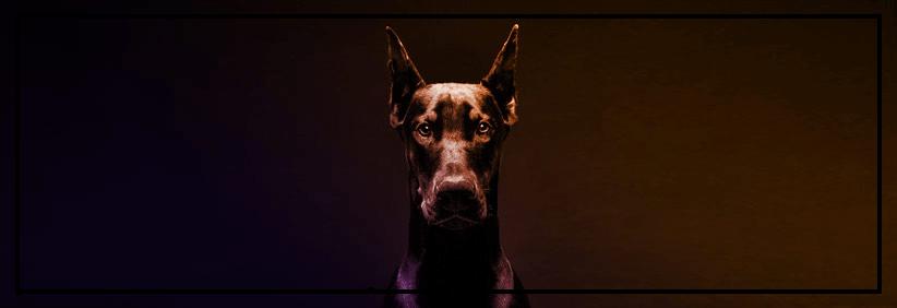 RevPi Connect Watchdog Funktionalität