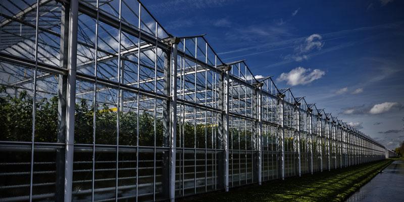 Success Story Banner - IoT im Pflanzenbau